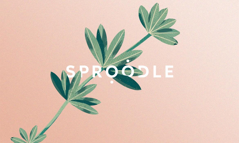 annahaerlin_branding_sproodle_03